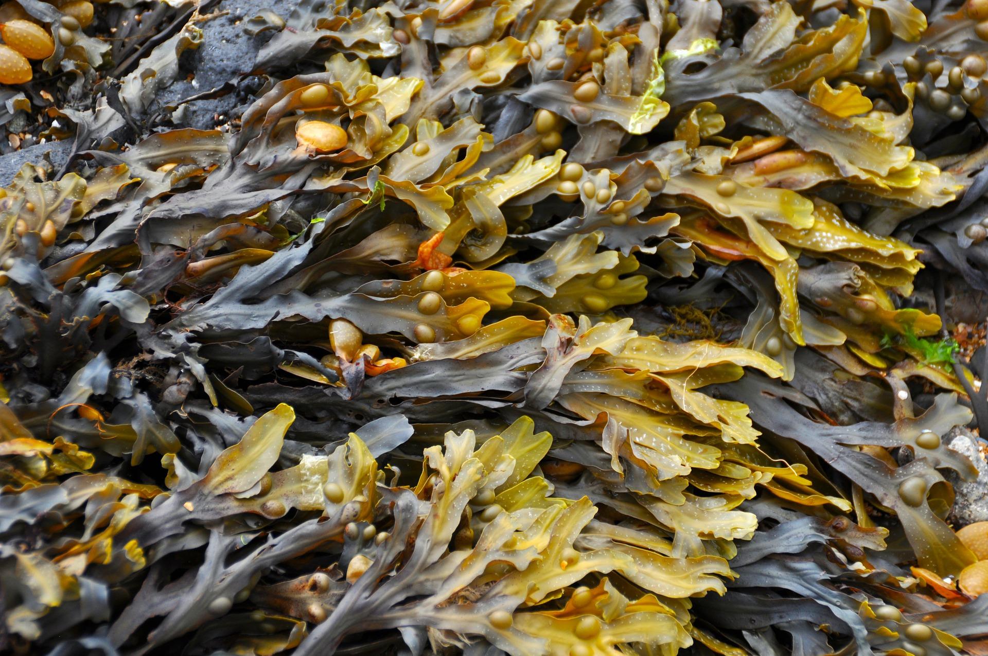 Elastina marina para prevenir las estrías