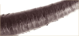 cutícula del pelo